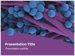 Staphylococcus Template PowerPoint