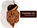 Digestive System Template PowerPoint