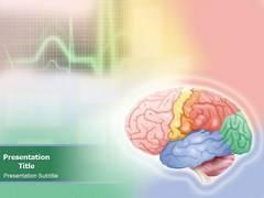 Brain Anatomy PowerPoint Design Slides