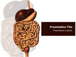 Digestive Disorders Template PowerPoint