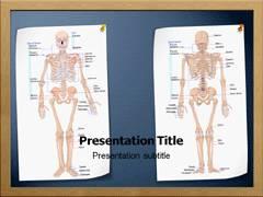 Skeletal System Anatomy PowerPoint Presentation