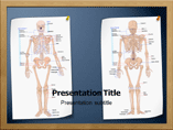 Skeletal System Anatomy PowerPoint Presentation