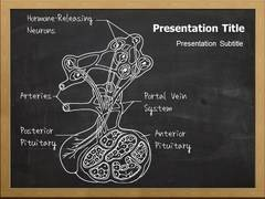 Anterior Pituitary PowerPoint Designs