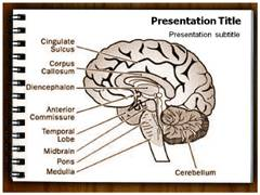 Brain Structure PowerPoint Slides