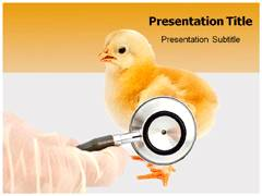 Chicken Diseases Template PowerPoint