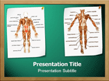Muscle PowerPoint Template