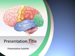 Brain Anatomy PowerPoint Presentation