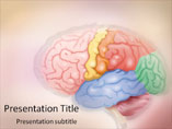 Human Brain PowerPoint Slides