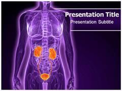 Urology Diseases PowerPoint Slides