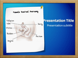Female Genital Anatomy PowePoint Presentation