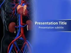 Cardiovascular System Diseases