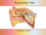 Ear Anatomy PowerPoint Presentation
