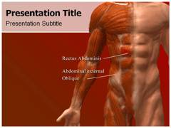 Abdominal Muscles PowerPoint Templates