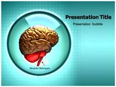 Medulla Oblongata PowerPoint Slides