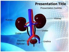 Animated Urology Template PowerPoint