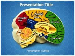 Brain Anatomy PowerPoint Theme