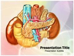 Abdominal Anatomy PowerPoint Templates