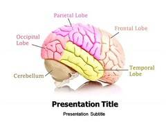 Brain Model PowerPoint Slides
