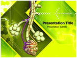 Alveoli Template PowerPoint