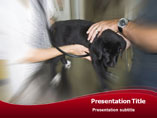 Veterinary Surgeon Template PowerPoint