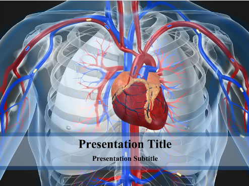Cardiovascular System PowerPoint Template